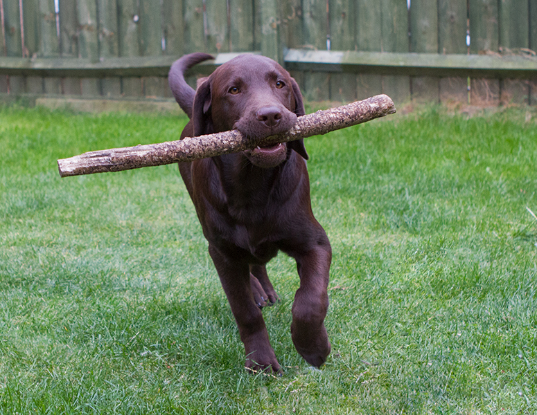 His favourite toy, the stick